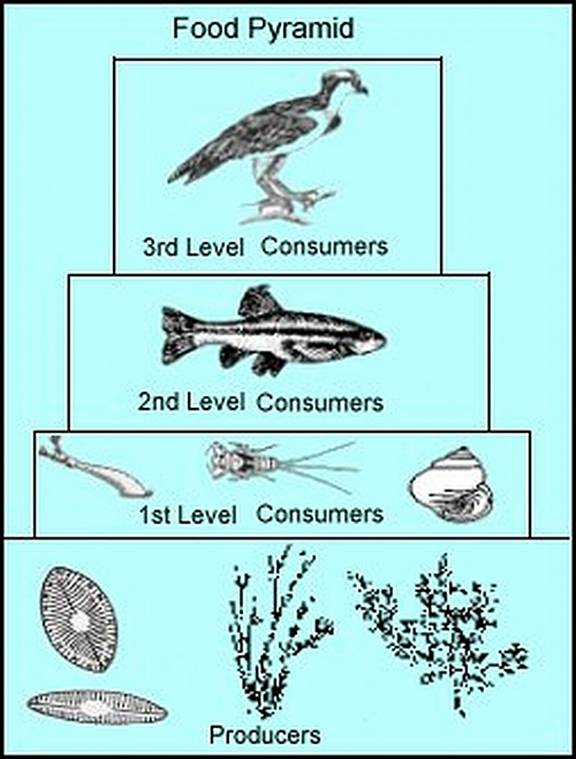 biology a local ecosystem A local ecosystem impacts on food chains and food webs food webs and food chains within ecosystems are dynamic and can be affected by a wide variety of biotic and abiotic factors.