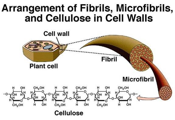 chemical composition of cell membrane pdf