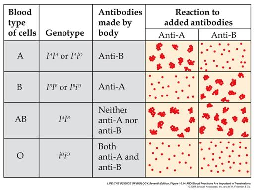 Exciting abo blood group genetics WANNA